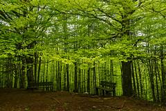_DSC5252 (Giuseppe Cocchieri) Tags: trees light mountain color tree verde green primavera colors alberi forest spring nikon colore earth v nikkor terra albero colori montagna luce bosco foresta allaperto