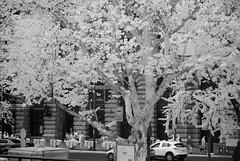 DSC01326 (zkj102) Tags: city tree rain ir 3d cityscape shanghai stereo infrared htconex
