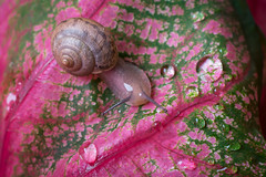 Small World (Linda Dyer Kennedy) Tags: pink abstract macro green water rain animal catchycolors drops snail