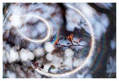The breath of life (leo.roos) Tags: leaves spring lomography buds lente challenge bladeren krasnogorsk dyxum darosa russianlenses artlens leoroos a7rii zenitnewpetzval5819bokehcontrol aprilfoolishness2016
