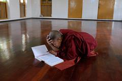 Buddhist monk studying (alexilea) Tags: buddha burma religion buddhism monastery myanmar spirituality