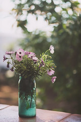 ({Larysa}) Tags: flowers light flores flower luz canon ramo 135mm
