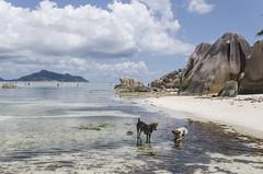Ile de la digue_3792 (Luc Barré) Tags: island seychelles source îles île dargent
