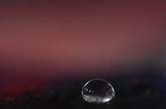 Opium (Niara Art) Tags: light colour detail macro closeup waterdrop drop minimalism liquid nikond7100