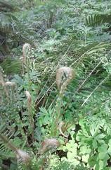 tillamookflower09 (jcravens) Tags: oregon forest hike campground galescreek stateforest tillamookforest