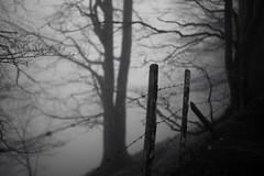 Schnebelhorn country (Toni_V) Tags: wood bw mist monochrome rain fog forest schweiz switzerland blackwhite europe dof nebel suisse bokeh hiking zurich rangefinder mp zrich svizzera schwarzweiss zaun wald barbwire stacheldraht wanderung randonne 2016 svizra escursione sep2 summiluxm leicam schnebelhorn 35mmf14asph digitalrangefinder niksoftware 35lux messsucher 160418 silverefexpro2 35mmf14asphfle typ240 toniv m2404426 gibswilschnebelhorn