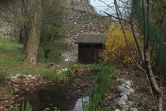 la cabane et l'tang (bulbocode909) Tags: nature jaune suisse vert printemps valais cabanes tangs