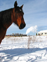 Horse of a different Color (GLC 392) Tags: road railroad winter horse snow cold mi photo nice power lima michigan great central lakes engine railway super steam kind curious pm berkshire pere marquette freight glc charter berk 1225 carland 284 owosso