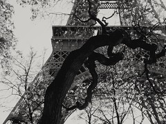 L'arbre ..Eiffel! The Eiffel t...tree!! (alainpere407) Tags: paris tree eiffeltower toureiffel arbre blackdiamond streetsofparis parisblackandwhite parisnoiretblanc parisinsolite alainpere candidpictureinparis