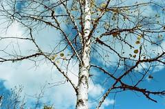 Real North (Laura-Lynn Petrick) Tags: trees lake canada water north lakes shore lakeshore birch canadiana northernontario bythewater campingincanada lauralynnpetrick lauralynnpetrickfilm lauralynnpetricknature lauralynnpetrickwater lauralynnpetrick35mm lauralynnpetrickbythewaterside