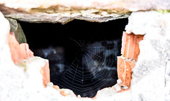 IMG_20160409_154351_DSC_2780-1 (TheGufotography) Tags: lake nature forest germany spider spidersweb mummelsee outddor northernblackforest