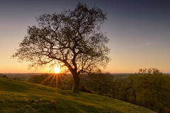 Croft Hill Tree at Sunset (John__Hull) Tags: new wood trees light sunset england sun nature landscape golden landscapes countryside spring nikon view leicestershire hill breath sigma growth filter croft nd vista taking 1020mm grad d3200