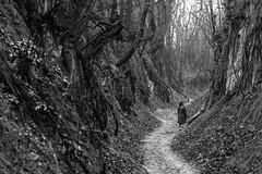 Holy Queen Jadwiga Gorge, Sandomierz (grzegorz_wdowiak) Tags: trees blackandwhite bw plant tree monochrome forest landscape europe outdoor poland polska gorge 2016 sandomierz wwz