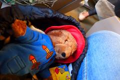 London daytrip... (domit) Tags: bear uk england london train teddy eurostar paddington british domit
