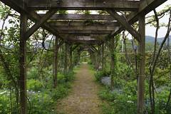 _DSC2032 (Osamu1965) Tags: flower japan zeiss garden spring sony contax jp   okayama     a7m2  carlzeissvariosonnart2870mmf3545mm