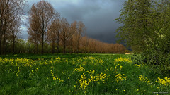 The hailstorm before it hit me (2) (John Riper) Tags: storm green nature yellow clouds photography nederland dramatic plus wildflowers nl iphone zuidholland hitland nieuwerkerk 6s nieuwerkerkaandenijssel hailo riper johnriper klntp