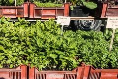 20160424 Provence, France 02604 (R H Kamen) Tags: food france market herbs mint vegetable basil variety abundance pricetag freshness marketstall vaucluse carpentras provencealpesctedazur westernscript rhkamen
