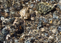 Uncountable lenses (chrisotruro) Tags: water closeup river spring stones riverbed april ripples