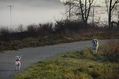 (Ian Threlkeld) Tags: nature landscape nikon flickr bc britishcolumbia canadian explore popular westcoast pnw mapleridge irt beautifulbc nikonphotography explorebc d7000