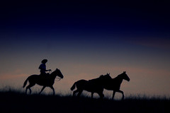 No rumo (Eduardo Amorim) Tags: brazil horses horse southamerica brasil criollo caballo cheval caballos cavalos pelotas pferde cavalli cavallo cavalo gauchos pferd riograndedosul pampa hest hevonen campanha brsil chevaux gaucho  amricadosul fronteira hst gacho  amriquedusud  gachos  sudamrica suramrica amricadelsur  sdamerika crioulo caballoscriollos criollos   americadelsud  crioulos cavalocrioulo americameridionale caballocriollo eduardoamorim cavaloscrioulos