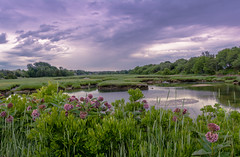 BARNSTABLE MA. (jlucierphoto) Tags: flowers summer plant green water field grass clouds landscape purple outdoor capecod massachusetts marshes barnstable lovelyflickr