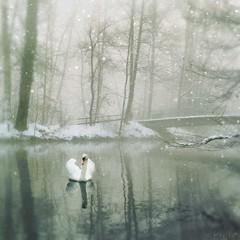 Cold Silence (M a r i k o) Tags: schnee winter mist snow cold mobile fog river germany square bayern bavaria swan nebel squareformat mariko schwan atmospheric stadtpark iphone erding snowdaze mobilephotography sempt iphonephotography iphoneography picfx hipstamatic phototoaster