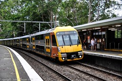 Sydney Tarins - On the return journey - Waratah Set A55 arrives at  Normanhurst on a Central service (john cowper) Tags: sydney railwaystation newsouthwales suburbs a55 normanhurst sydneytrains newsouthwalesrailways mainnorth suburbanrailways waratahset nswtrainlink