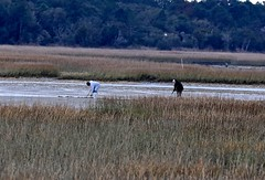 People on the Marsh #12 (Gabriel FW Koch) Tags: cold outside outdoor inlet marsh lowtide clams raking clamming clamdigging