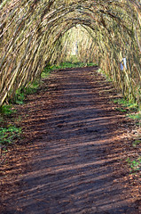 The Willow Shades Walk (Paul C Cooper) Tags: shadow sun tree green arch path walk craft willow cast shade 52in2016