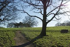 winter sun (dick_pountain) Tags: trees winter shadow sun london parliamenthill grss