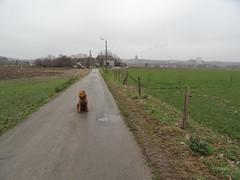 2016-0094 (schuttermajoor) Tags: nederland hond che eijsden 2016 airedaleterrier ommetjenederland