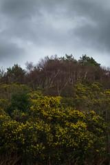 (mail_jones) Tags: trees sky landscape fujifilm wirral westkirby xseries xt10