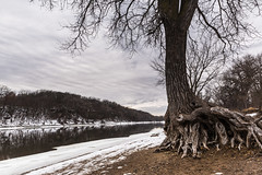 Gnarled Tree (epmd) Tags: trees winter snow cold reflection tree clouds reflections river mississippiriver twisted