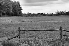 Out to Pasture (Kerryjwagner) Tags: bw monochrome field mono farm pasture 51115 knoxfarm daarklands
