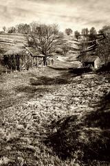 Passeggiata_rurale (Danilo Mazzanti) Tags: photography foto photos ombre campagna erba fotografia paesaggio collina fotografo danilo seppia mazzanti rurale monocromatico armonia baracche danilomazzanti wwwdanilomazzantiit