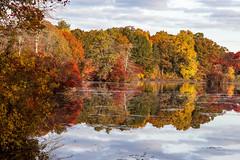 Morning at West Brook Pond (Bob90901) Tags: morning autumn trees newyork reflection tree fall water canon landscape pond october outdoor fallcolors symmetry longisland fallfoliage 32 6d 2015 suffolkcounty canonef24105mmf4lisusm hemiola polyrhythm westbrookpond