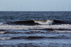 Sea Shore (NTG's pictures) Tags: sea shells cormorants bay harbour gulls pebbles bae rhyl oystercatchers kinmel cinmel