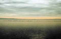 Un meritato riposo - A well deserved rest (Fabio Polimadei) Tags: nature birds clouds landscape ducks