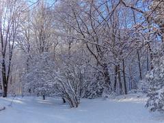 DSC01632-2 (johnjmurphyiii) Tags: winter usa snow connecticut shelly cromwell originaljpeg johnjmurphyiii 06416 sonycybershotdsch90