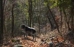 Mastik (bulbocode909) Tags: nature rouge hiver vert arbres chiens forts
