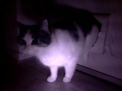 20160212-182547-i-1 (Catflap central) Tags: camera dog pet cats woof cat pi raspberry meow doggie catdoor catflap kattenluik katzenklappe catflapj2nnl taggingasdoguntilautotagginghasanoptout robotaggingisthedevil