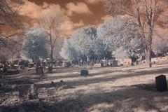 Impressive Yews in the churchyard (IanAWood) Tags: nikond70 graveyards middlesex cofe churchofengland digitalir harefield convertedinfrared walkingwithmynikon churchyardofstmarythevirgin nikkorafs20mmf28d 720nmir churchesofmiddlesex