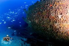 Seamaster (ShaunMYeo) Tags: scubadiving wreck seamaster gibraltar wrecks calpe underwaterphotography  gibilterra ikelite artificialreef      gibraltr  cebelitark gjibraltar ibraltaro hibraltar xibraltar giobrltar gibraltrs gibraltaras ibilt
