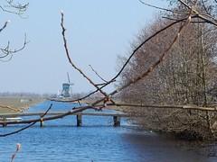 Spengense molen vanaf Spengense Molenvliet (bcbvisser13) Tags: panorama windmill bomen nederland eu molen weiland landschap takken bruggetje vaart doorkijk symetrisch spengen