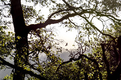 Vulture Soars (seen from a window) (Reptilian_Sandwich) Tags: trees black green window nature leaves forest moss solitude outdoor hiking branches flight peaceful hidden cover peek portal organic vulture spying tranquil spotting secluded afternoonlight