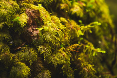 Mini Jungle (Aaron Fredericy) Tags: plants plant tree green wet water oregon moss gorge columbiarivergorge wahclella