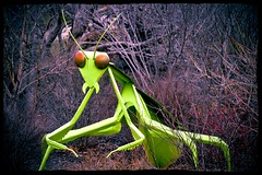 mantis (brown_theo) Tags: columbus ohio sculpture green art public bug campus mantis rust state display steel praying arboretum osu antennae chadwick