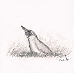 Groene Specht2 (ArjanLoeve) Tags: bird art nature sketch specht groene birdwatching alblasserwaard yaffle schets birdart hardinxveld