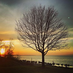 Beautiful night at my favorite place. (imagesafari) Tags: sunset tree nature lakeerie 440 cle thattree rrpark instagram igersohio clevelandgram thisiscle igerscleveland clegram
