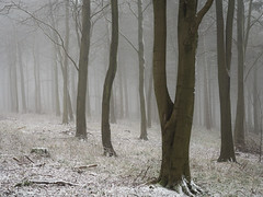 Serendipity (Damian_Ward) Tags: wood morning trees mist snow misty fog forest woodland photography chilterns buckinghamshire foggy bucks beech wendover astonhill thechilterns chilternhills wendoverwoods damianward ©damianward